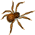 Coll superstitious spider