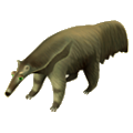 Anteater deco.png