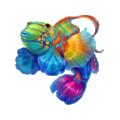 Coll fish mandarin fish