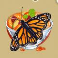 Coll butterflies monarch