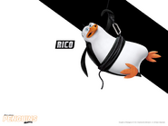 Rico8