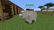 Polar bear tame
