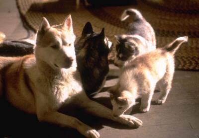 File:Diefenbaker Puppies Wild Bunch.jpg