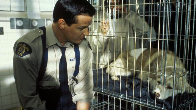 File:Constable Benton Fraser Diefenbaker Cage Victoria's Secret 2.jpg