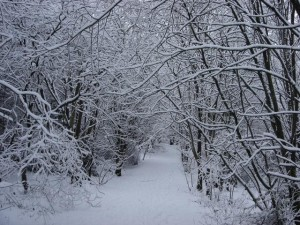 Path to the Deverill Home