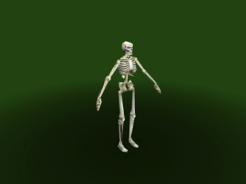 File:Skeleton.jpg