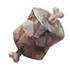 Rock Sirloin (HWL)