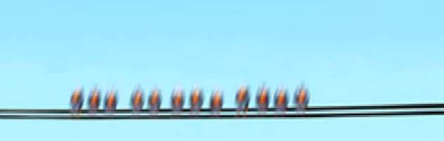 File:Birds from for the birds in Cars.png