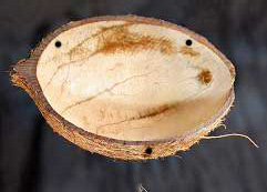File:Craftbits coconut shell bird feeder.jpg