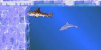 Arctic Shark