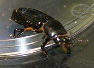 Bess Bug
