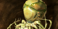 Exploding Poison Spider (Scroll)
