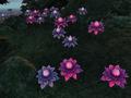 Mana Bloom.png