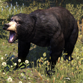 ESO Black Bear.png