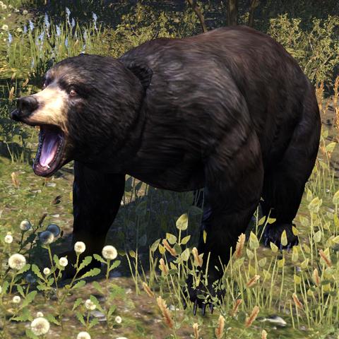 File:ESO Black Bear.png