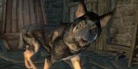 Sakeepa's Dog