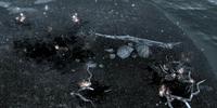 Yisra's Beachside Combustion