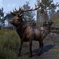 ESO Elk.png