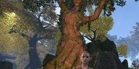 Treethane Nilara