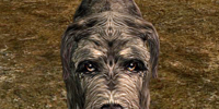 Dog (Skyrim)