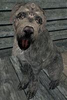 Vigilance (dog)