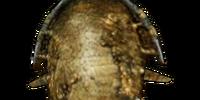 Bonemold Shield (Morrowind)