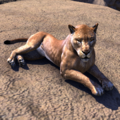 ESO Lioness.png
