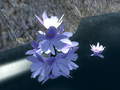 Water Hyacinth.png