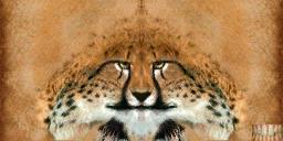 File:Khajiit texture 7.png