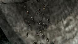 Ants Close-up
