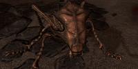 Ash Hopper (Dragonborn)