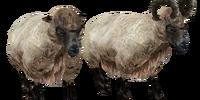 Sheep (Oblivion)