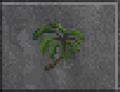 Palm (Daggerfall).png
