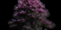 Noble Sedge Flowers