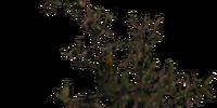 Roobrush