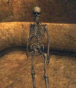 Skeleton Archer (Morrowind)