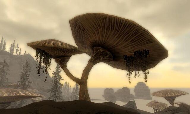 File:Emperor Parasol in Dragonborn.jpg