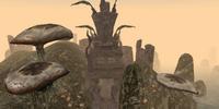 Kaushtarari (Morrowind)