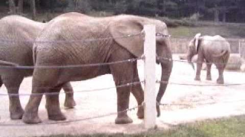 Elephants 2, ZOO Lesna - Sloni 2, ZOO Lešná