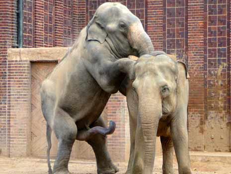 Datei:Tiergeschichten-05-elefanten-MBQF-10918204,templateId=renderScaled,property=Bild,height=349-1-.jpg