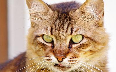 File:Cat by elkcreek-d7z5oi6.png