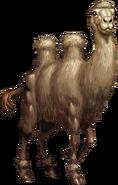 Camel Daf