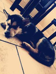 Malibu the dog