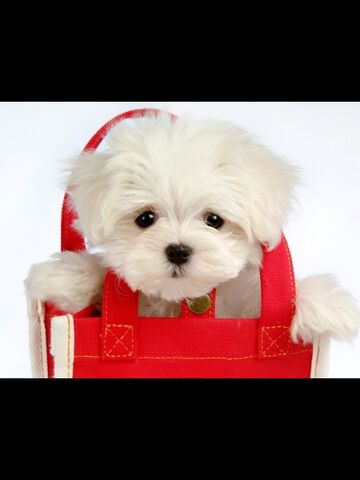 File:Adorable dogs.jpg