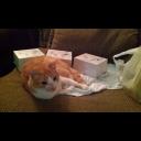 File:Kirbycat.jpg.png