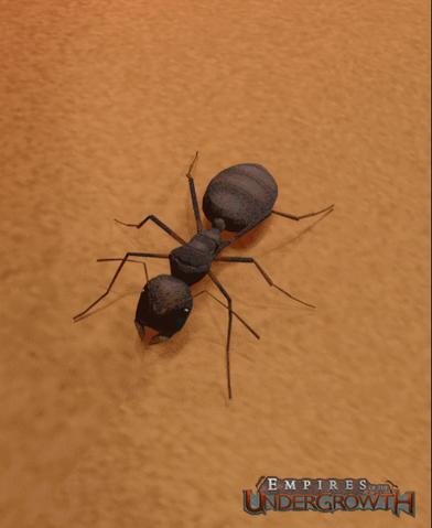 File:Black Garden Ant.png