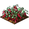 Crop Chili Peppers Grown SW Icon