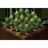 Crop Artichokes Grown SW Icon