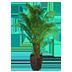 IndoorPlant01