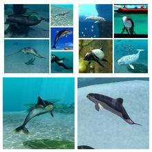 Dolphin partners